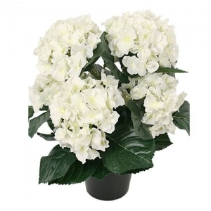 Hydrangea in a Pot White by Grand Illusions