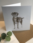 Exclusive  ''Labrador'' greetings card  by Sam Purcell for Hilly Horton Home