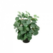 Faux Fittonia Plant by Grand Illusions